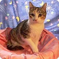 Adopt A Pet :: Lily - Randleman, NC