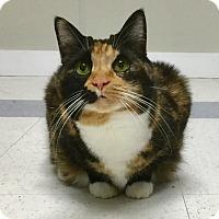 Adopt A Pet :: Callie - Webster, MA