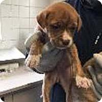 Adopt A Pet :: Willow's Abbey - Chantilly, VA