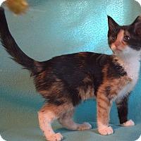Adopt A Pet :: Peony - Spring Valley, NY