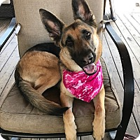 Adopt A Pet :: Lola - New Smyrna Beach, FL