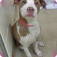Adopt A Pet :: FRAN see also PAULA - Marietta, GA