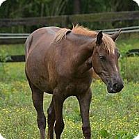 Adopt A Pet :: Giggles - Waleska, GA
