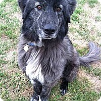 Adopt A Pet :: Dallas - Auburn, CA