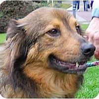 Adopt A Pet :: Roxy - Kingwood, TX