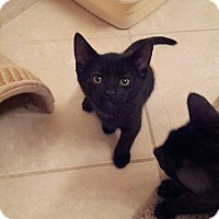Adopt A Pet :: Spook - Ft. Lauderdale, FL