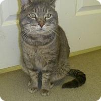 Adopt A Pet :: Larry - Hamburg, NY