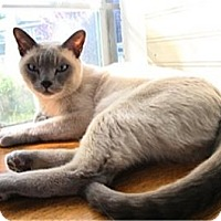 Adopt A Pet :: Garam and Sanchal - Davis, CA