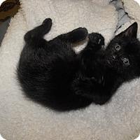 Adopt A Pet :: Scottie - Xenia, OH