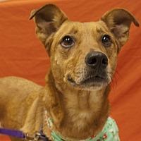 Adopt A Pet :: Sage - Baton Rouge, LA
