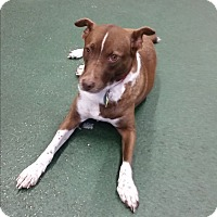 Adopt A Pet :: Rainbow - Homestead, FL