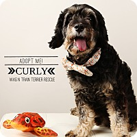 Adopt A Pet :: Curly-Pending Adoption - Omaha, NE