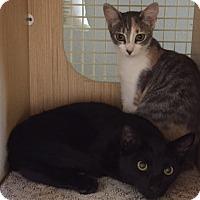 Adopt A Pet :: G R E T A - Brea, CA