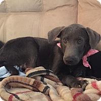 Adopt A Pet :: Puppies - Baden, PA