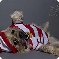 Adopt A Pet :: Ludo - Baton Rouge, LA
