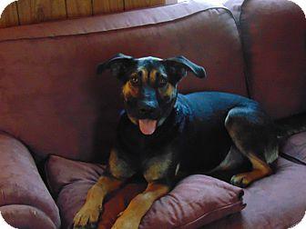 German Shepherd Dog Mix Dog for adoption in Greeneville, Tennessee - Sadie Sue