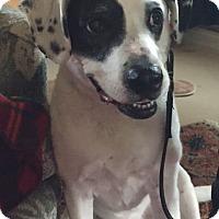 Adopt A Pet :: Ruben - Petaluma, CA