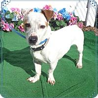 Adopt A Pet :: VICK - Marietta, GA