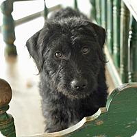 Adopt A Pet :: Tinley - San Antonio, TX