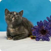 Adopt A Pet :: Magenta - Houston, TX