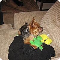Adopt A Pet :: Todd - Goodyear, AZ