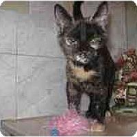 Adopt A Pet :: Penny - Catasauqua, PA