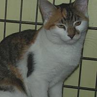 Adopt A Pet :: LINDSEY - Acme, PA