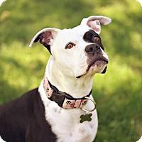 Adopt A Pet :: Purdy - Portland, OR