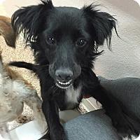 Adopt A Pet :: Roxie - Las Vegas, NV