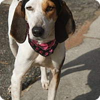 Adopt A Pet :: Hunter - Kinston, NC