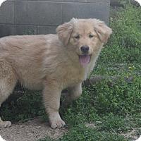 Adopt A Pet :: Chancey - Hazard, KY