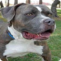 Adopt A Pet :: SERENA - Upland, CA