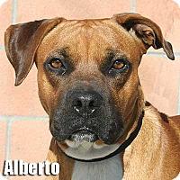 Adopt A Pet :: Alberto - Encino, CA