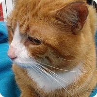 Adopt A Pet :: Sammie - Columbus, OH