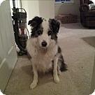 Adopt A Pet :: Nick (COURTESY POST)