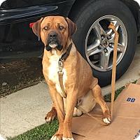 Adopt A Pet :: Delano - Van Nuys, CA