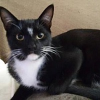 Adopt A Pet :: zz - Jenner (courtesy listing) - West Palm Beach, FL