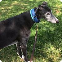 Adopt A Pet :: Kraken - Spencerville, MD