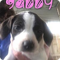 Adopt A Pet :: Gabby - Garden City, MI