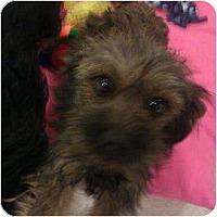 Adopt A Pet :: Tally - Phoenix, AZ