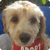 Adopt A Pet :: Amber-WATCH MY VIDEO!!! - Irvine, CA