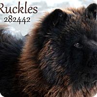 Adopt A Pet :: Ruckles - Tillsonburg, ON