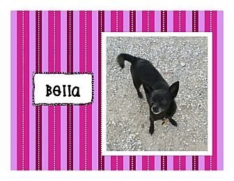 Chihuahua Mix Dog for adoption in Graford, Texas - Bella
