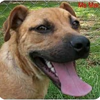 Bulldog/Terrier (Unknown Type, Medium) Mix Dog for adoption in Ozark, Alabama - Ms Mac