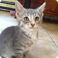 Adopt A Pet :: Pickle - Berkeley Hts, NJ