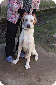 Labrador Retriever Mix Dog for adoption in DeForest, Wisconsin - Dunkin