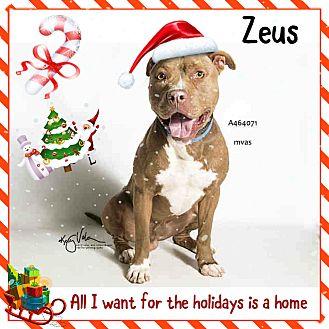 American Pit Bull Terrier/Pit Bull Terrier Mix Dog for adoption in San Bernardino, California - FINAL HOURS! Moreno Valley