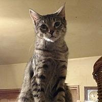 Adopt A Pet :: Pine - Benton, PA