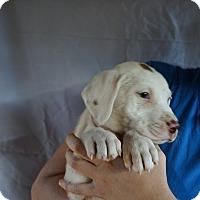 Adopt A Pet :: Bell - Oviedo, FL