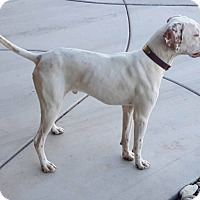 Adopt A Pet :: JOE - Hurricane, UT